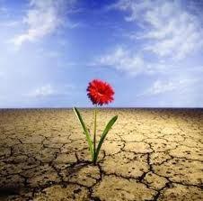 flor-en-el-desierto