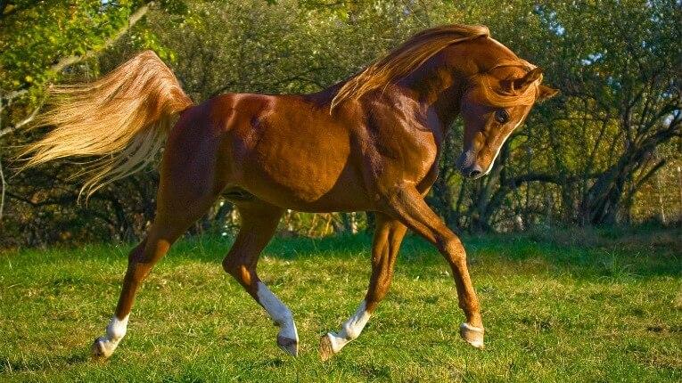La fábula china del caballo perdido | Seamos nosotros mismos. Diseño ...